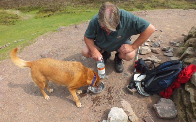 Dunkery Beacon Dog walk in Somerset