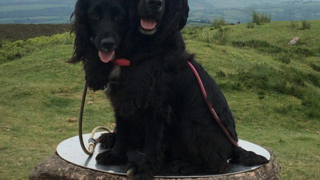 Dog walk at Dunkery Beacons