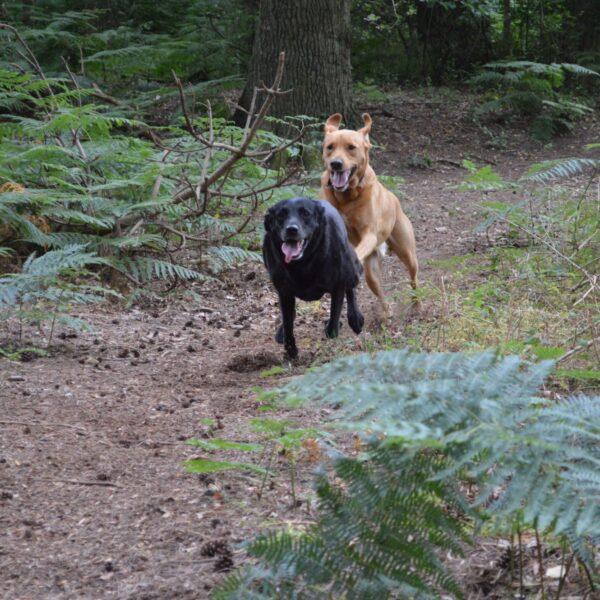 Dunwich Forest photo 1