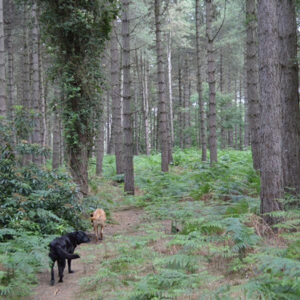 Dunwich Forest photo 2