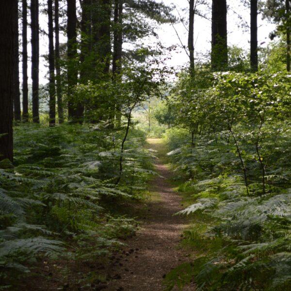 Dunwich Forest photo 3