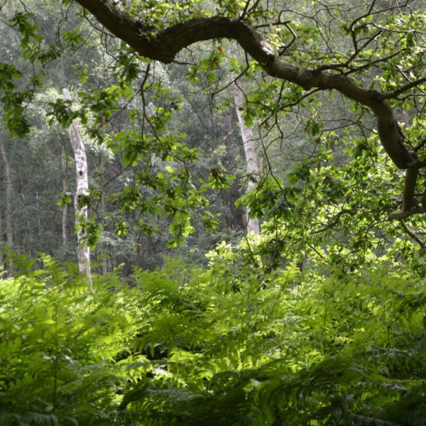 Dunwich Forest photo 6