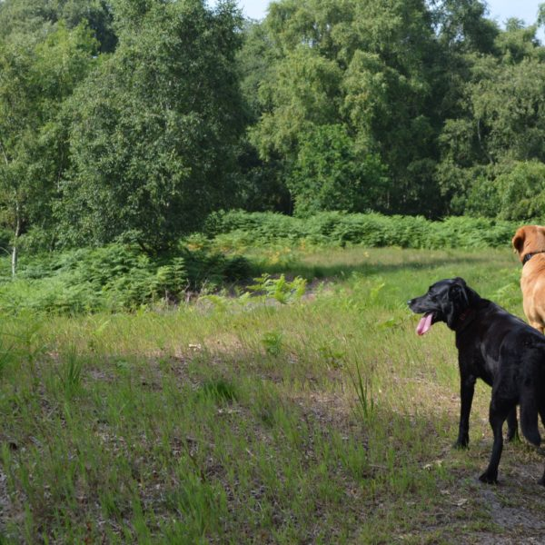 Dunwich Forest photo 8