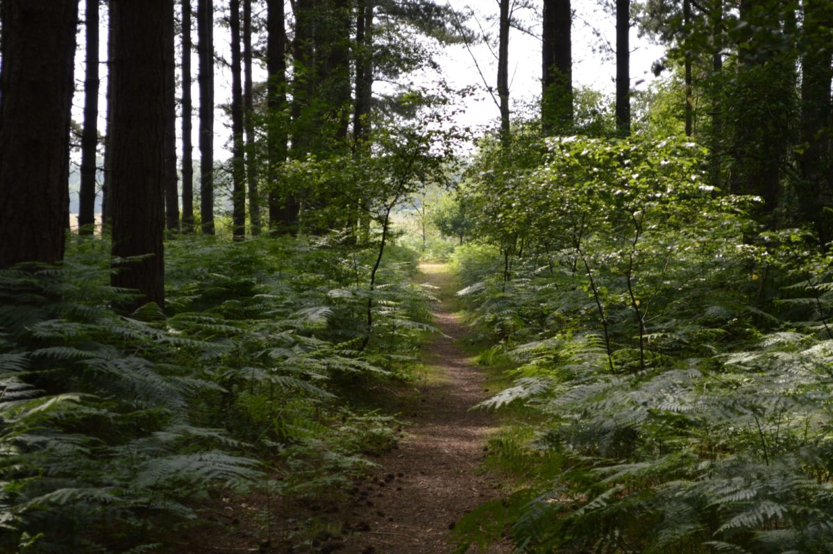 Dunwich Forest large photo 3