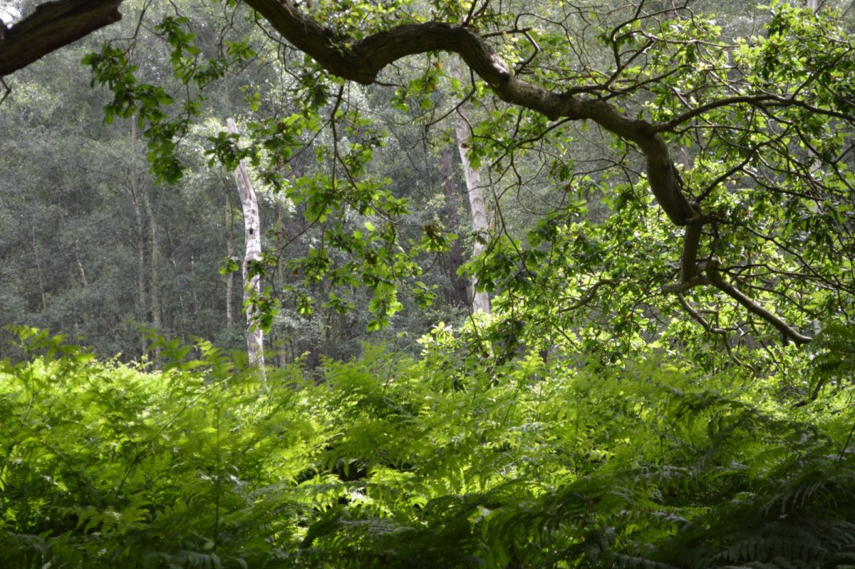 Dunwich Forest large photo 6