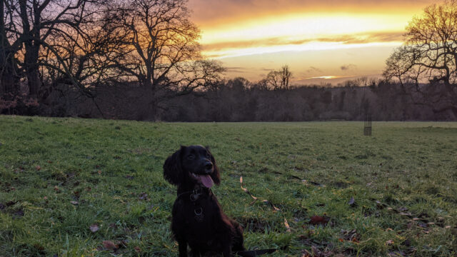 Dog walk at Earlham Park