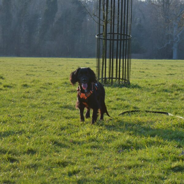 Earlham Park photo 3