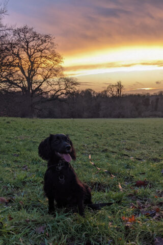 Dog walk at Earlham Park photo