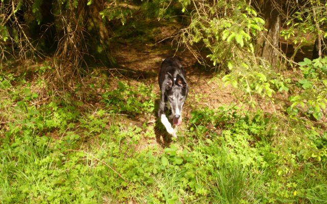 East Harptree Forest Dog walk in Somerset