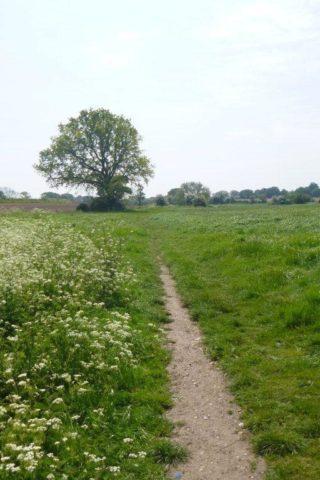 Dog walk at Eastergate/westergate photo