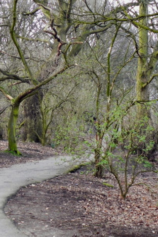 Dog walk at Eastham Country Park photo