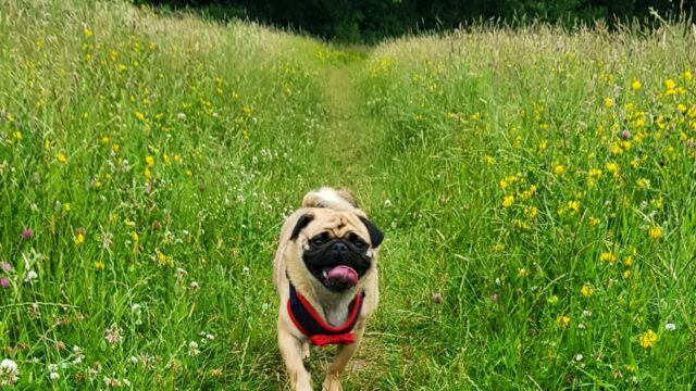 Dog walk at Eastrington Ponds Nature Reserve