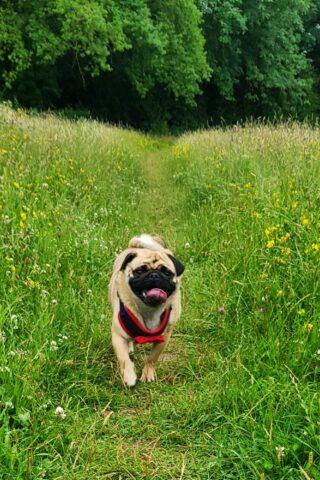 Dog walk at Eastrington Ponds Nature Reserve photo