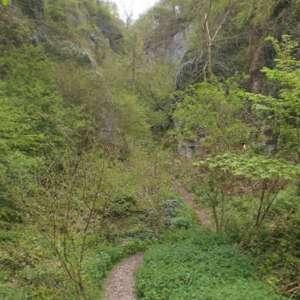 Ebbor Gorge (Red Trail)