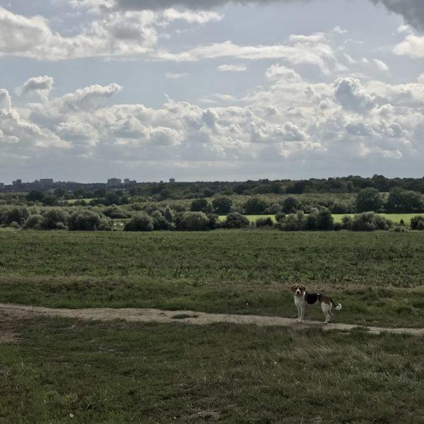 Dog walk at Edwards Hall Park