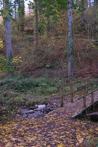 Dog walk at Eggesford Forest photo