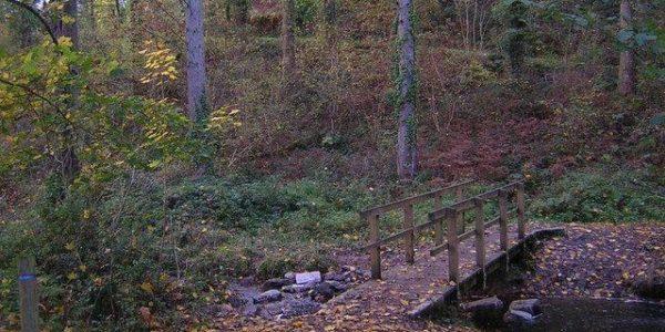 Heywood Woods