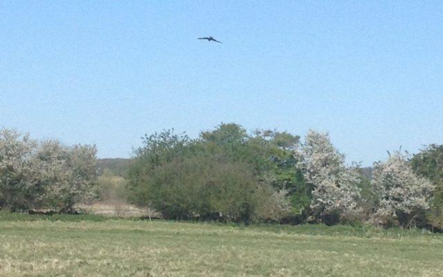Ellenbrook Fields (The Old Hatfield Aerodrome) Dog walk in Hertfordshire