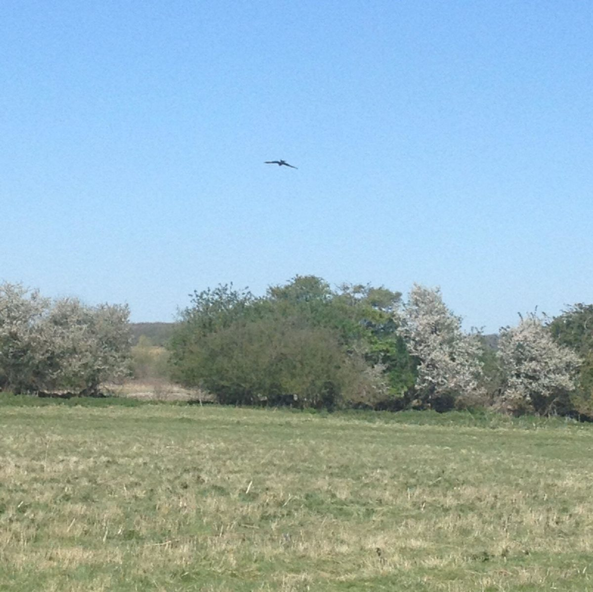 Ellenbrook Fields (The Old Hatfield Aerodrome) large photo 2