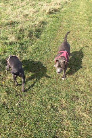 Dog walk at Enfield Island Village photo