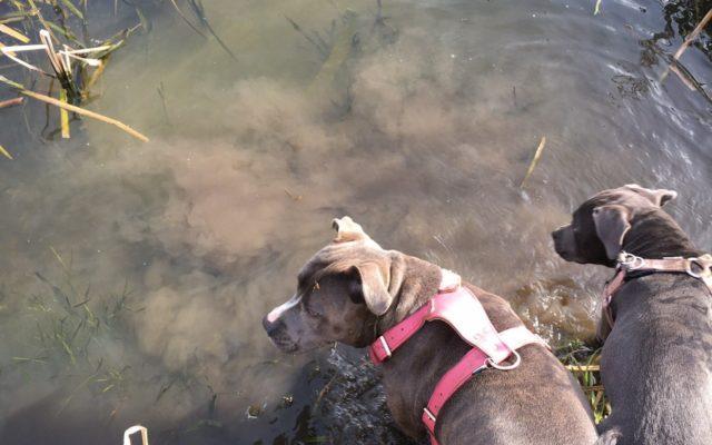 Enfield Island Village Dog walk in Middlesex