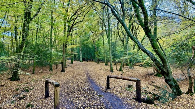 Dog walk at Epping Forest - Theydon Loop