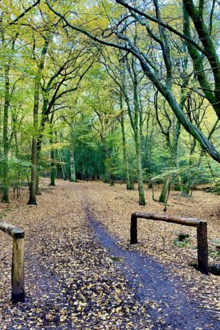 Dog walk at Epping Forest - Theydon Loop photo