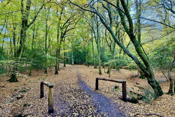 Epping Forest - Theydon Loopphoto