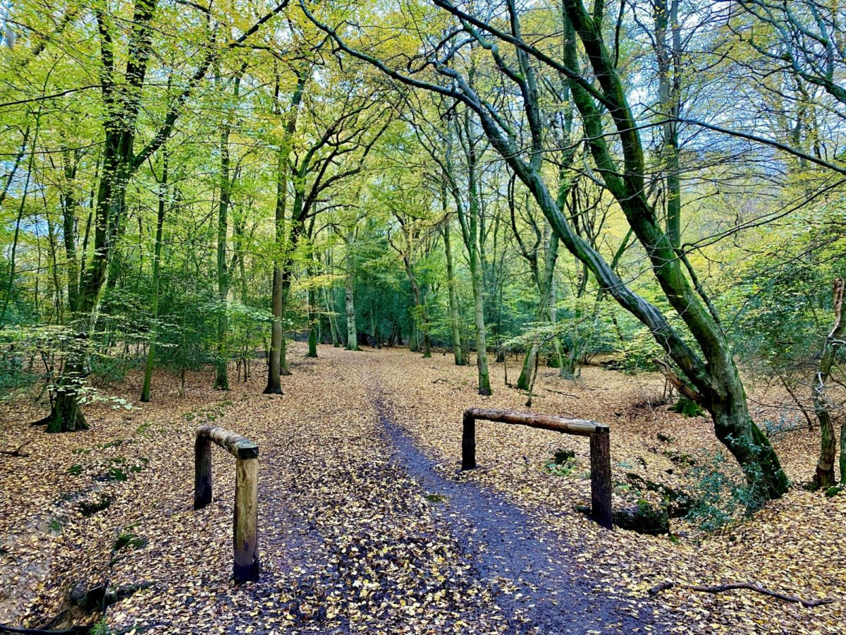 Epping Forest - Theydon Loop large photo 1