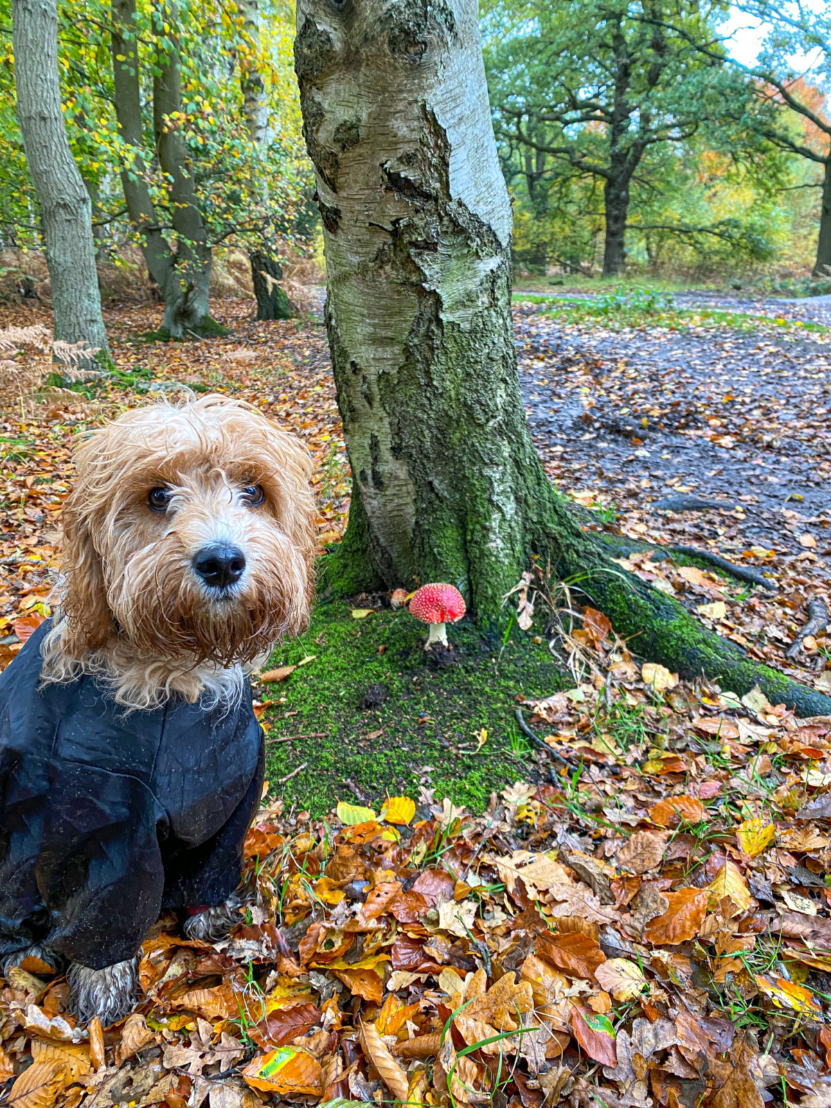 Epping Forest - Theydon Loop large photo 6