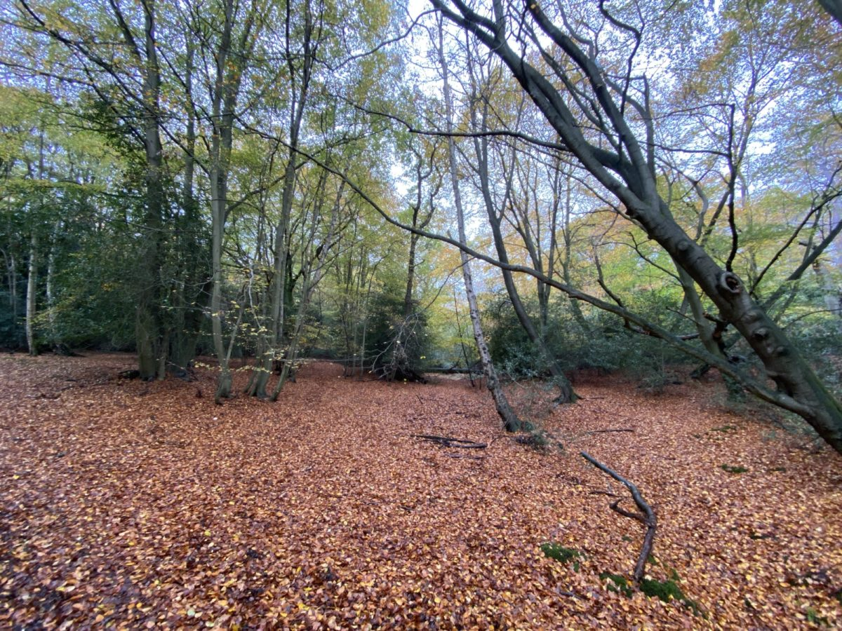 Epping Forest - Theydon Loop large photo 3