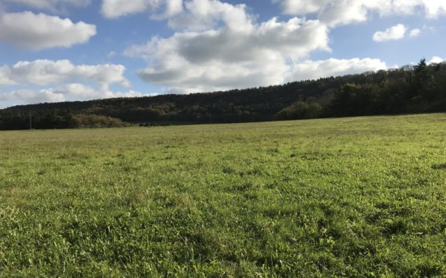 Erlestoke Woods Dog walk in Wiltshire