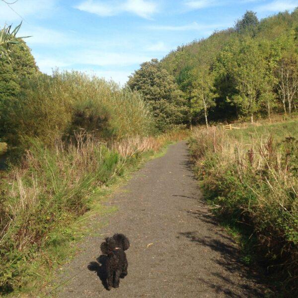 Dog walk at Etal Riverside Walk