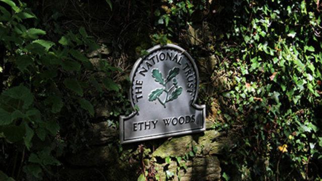 Dog walk at Ethy Woods, Lostwithiel
