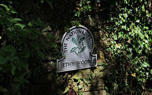Ethy Woods, Lostwithiel Dog walk in Cornwall
