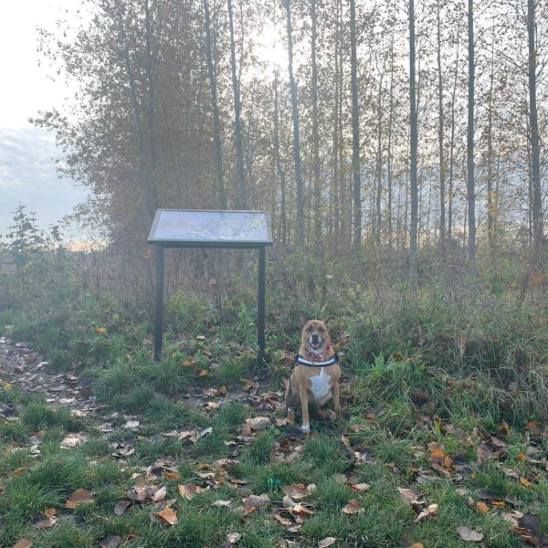 Etonbury Woods & Nature Reserve photo 4