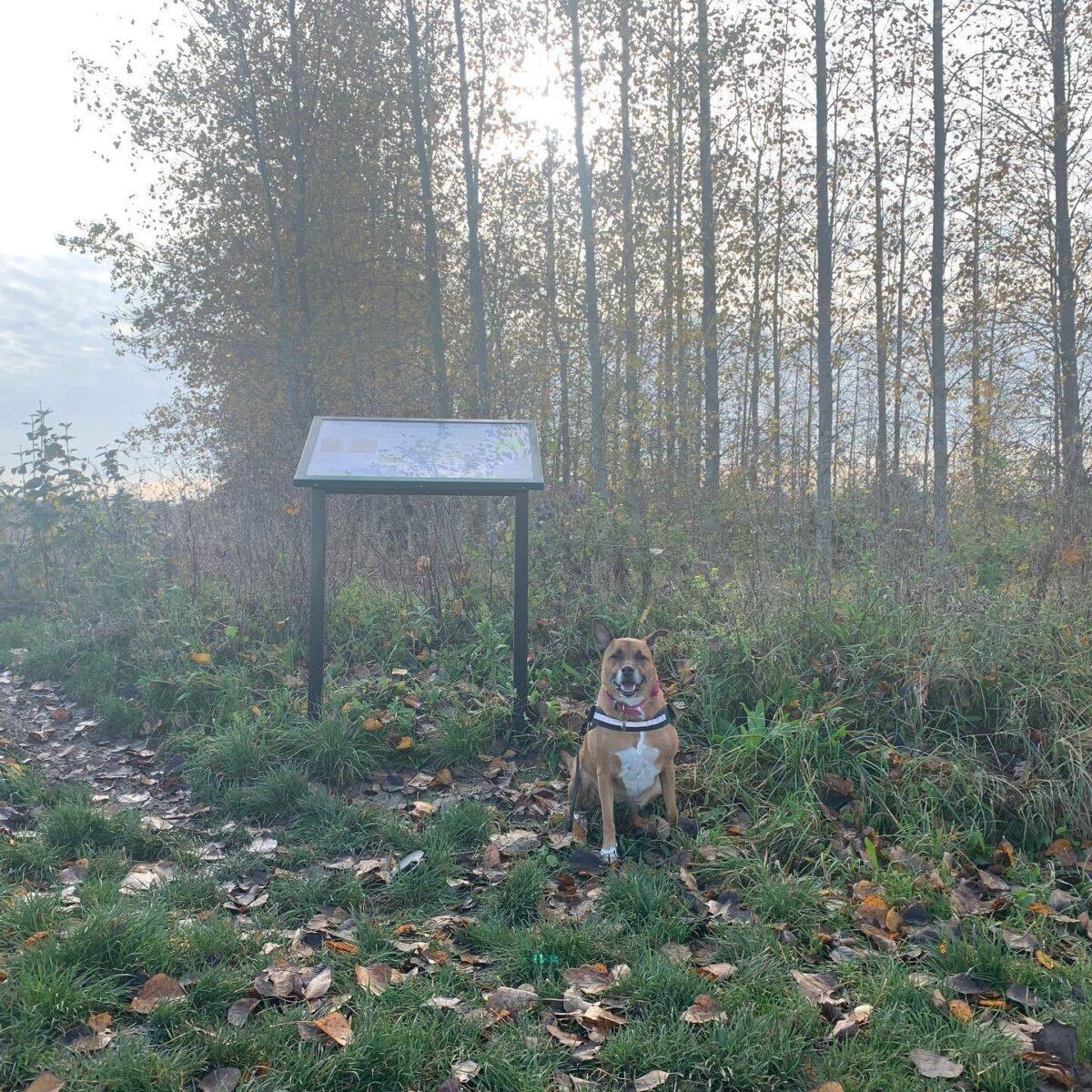 Etonbury Woods & Nature Reserve large photo 4