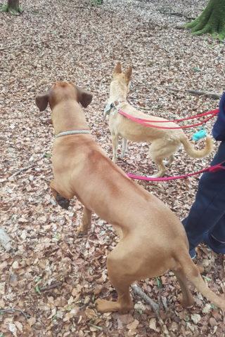 Dog walk at Eyeworth Pond photo