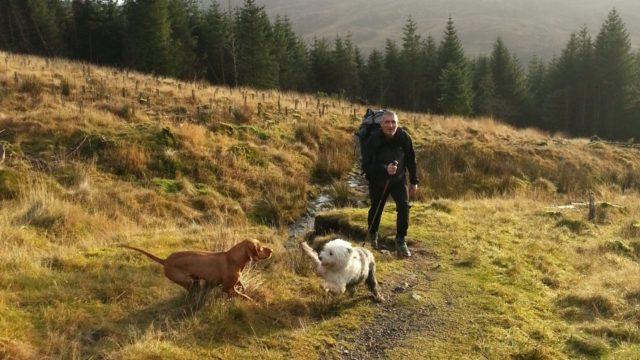 Dog walk at Failford Gorge (River Ayr Way)