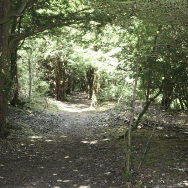 Farley Mount Country Park photo 3