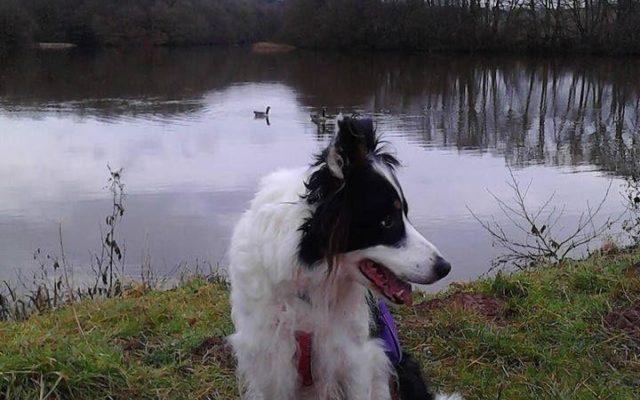 Farm Track Around Kyre Pool Nr Tenbury Well Dog walk in Worcestershire