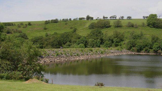 Dog walk at Felindre Reservoir