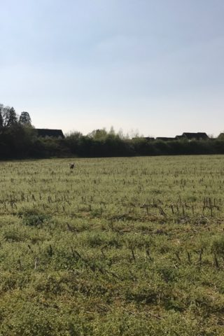 Dog walk at Fields, Hedge End photo