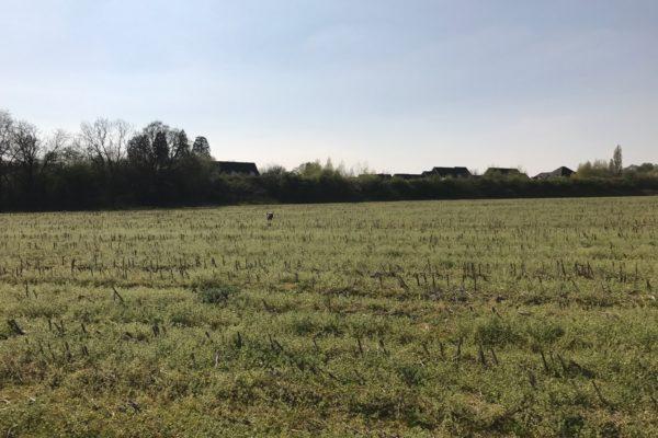Fields, Hedge Endphoto