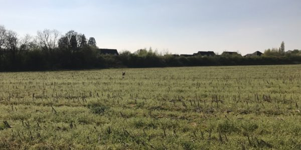 Fields, Hedge End