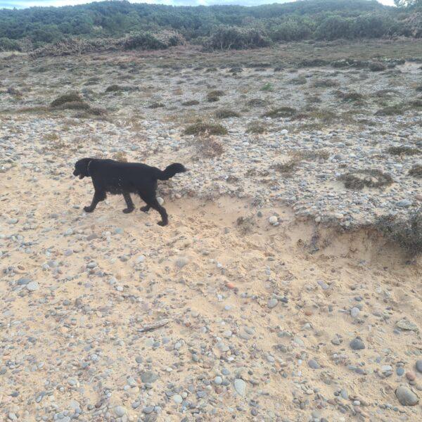 Findhorn Sand Walk photo 3