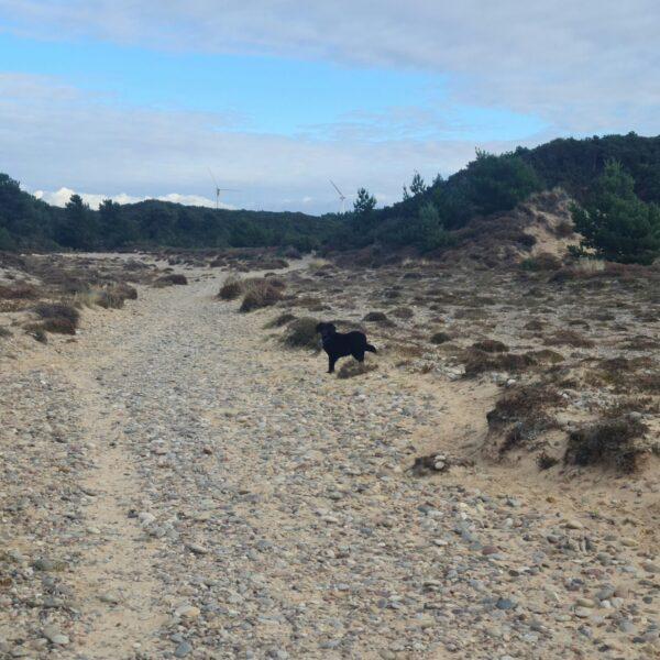Findhorn Sand Walk photo 2
