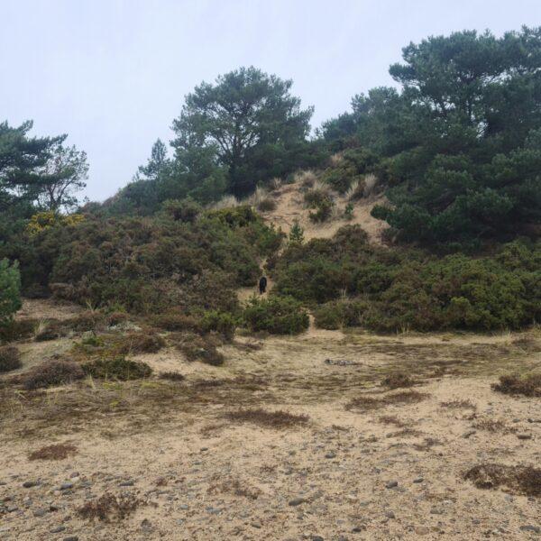 Findhorn Sand Walk photo 4