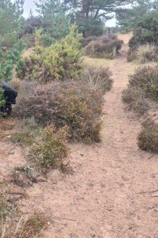 Dog walk at Findhorn Sand Walk photo