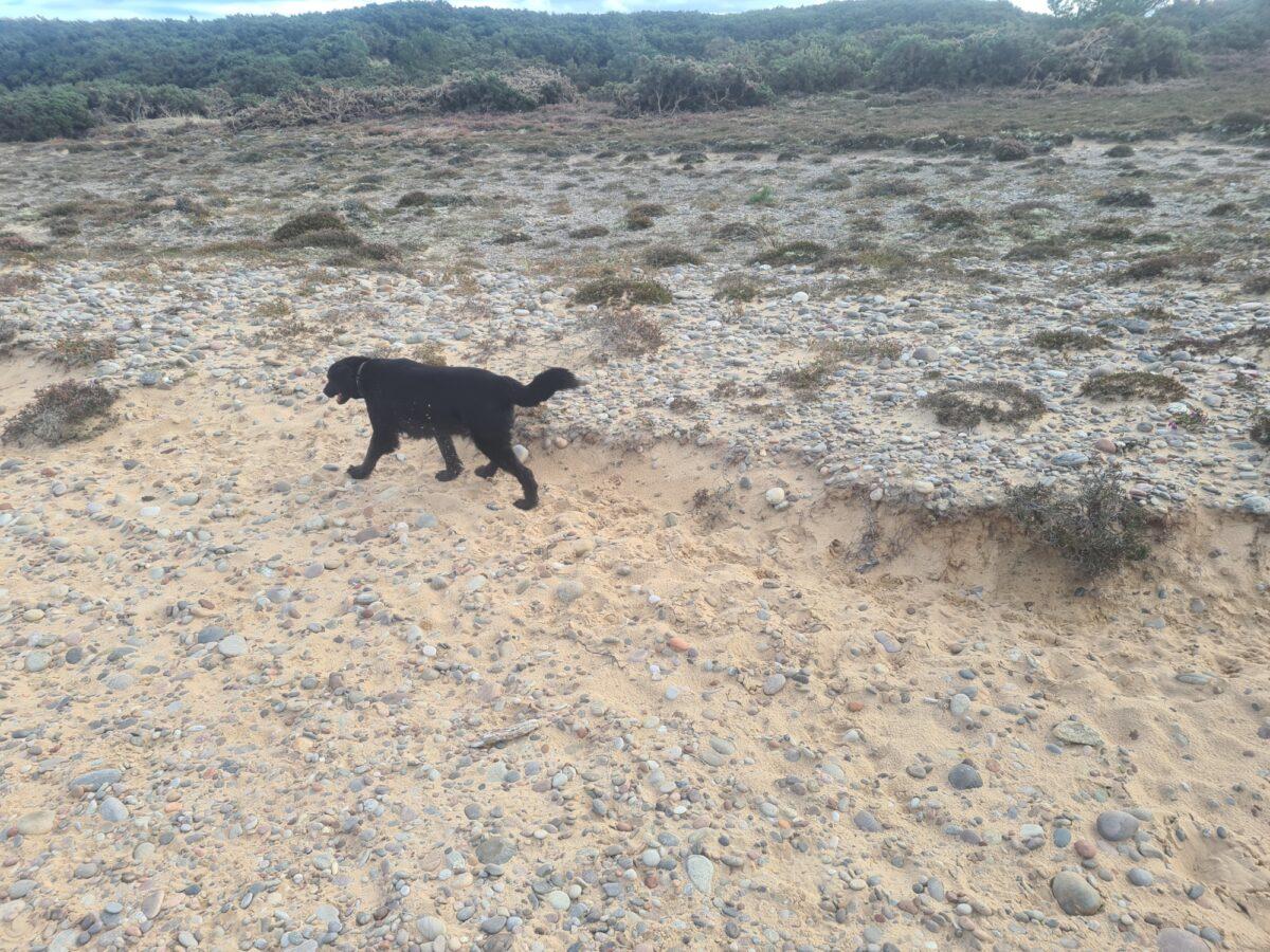 Findhorn Sand Walk large photo 3